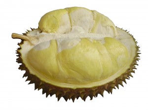 Cara Memilih Durian Montong dan Biasa